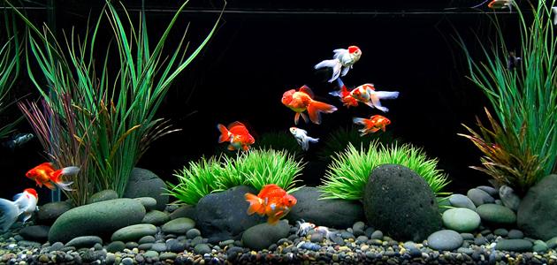 Tips Mudah Memelihara Ikan di Aquarium