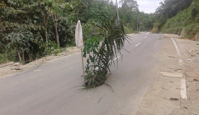 Warga Tanam Pohon di Jalan Berlubang