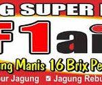 Ini Omset Jual Jagung Super Manis F1 Aina Pekanbaru