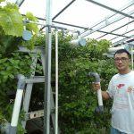 Kiat Bercocok Tanam Hydroponik Ala Pekanbaru Green Farm