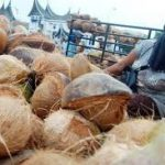 Technology Caused Coconuts's Prices Slumped