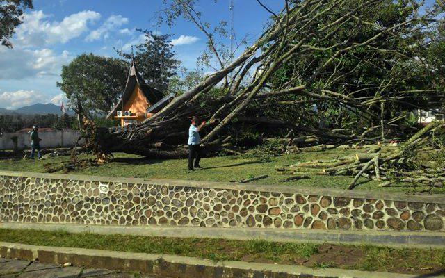 Pohon Besar Tumbang, 12 Siswa SMAN 1 Jadi Korban