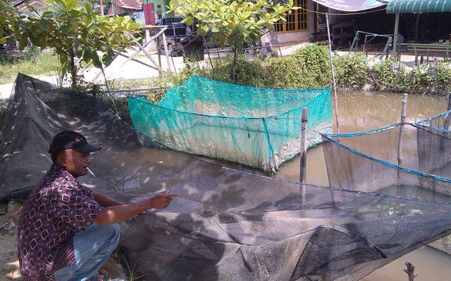 Jelang Lebaran, Harga Bibit Ikan Stabil