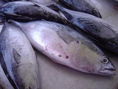 Harga Ikan Laut Masih Tinggi