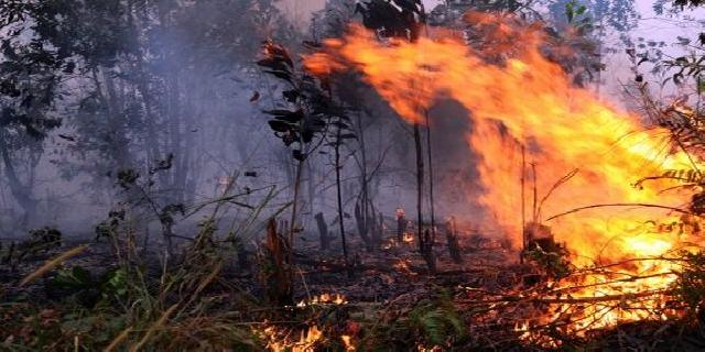Pemprov Riau Kirim Satpol PP Padamkan Api Karhutla