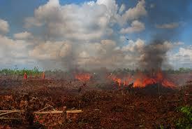 BMKG: Riau Rawan Kebakaran Hutan