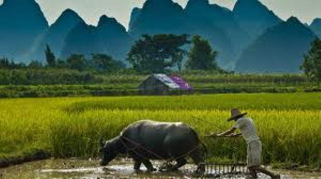 Nilai Tukar Petani Riau Turun 0,53 Persen
