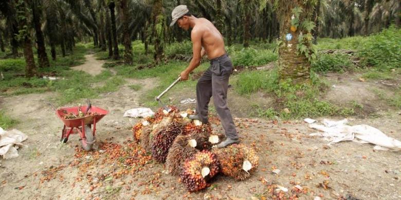 KPB Nusantara, Harga Lelang Minyak Sawit Capai Rp7.805 per Kg