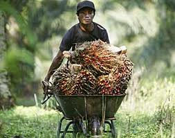 Pertama Kali di Indonesia, Petani Sawit Swadaya Terima Sertifikat RSPO