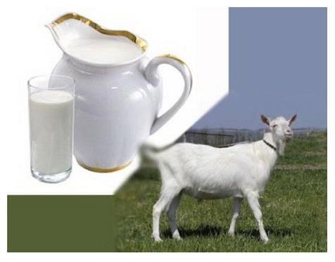 Susu Kambing Bisa Memenuhi 32 Persen Kalsium Tubuh