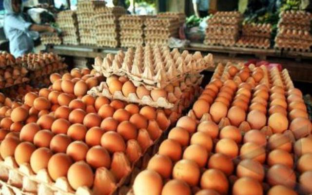 Harga Telur Ayam Buras Terus Menanjak
