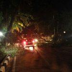 Pohon Tumbang di Jalan Diponegoro XI, Pengendara Tetap Nekat Lewati