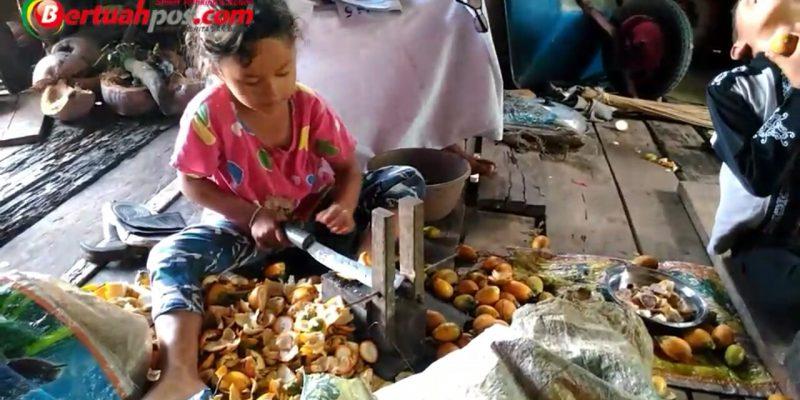 Video: Harumi, Bocah 5 Tahun di Inhil Ini Mahir Mengupas Pinang