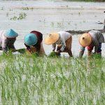 Kondisi Pendapatan Petani di Riau Ibarat Kata Pepatah Besar Pasak dari Tiang