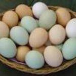 Waduh! Harga Telur Ayam dan Itik di Pekanbaru Naik