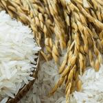 Produksi Pangan Pertanian di Pekanbaru Belum Bisa Penuhi Kebutuhan Pokok Masyarakat