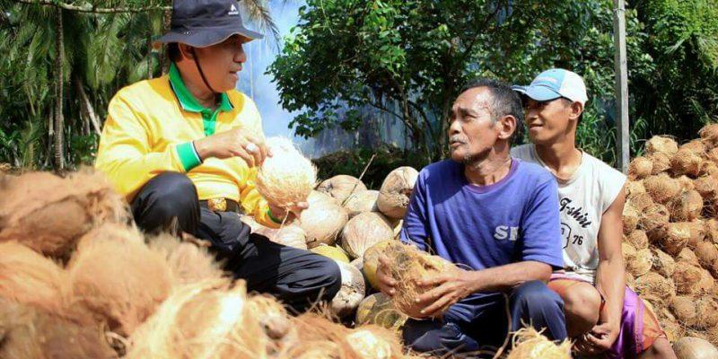 Meski Corona, Harga Kelapa di Inhil Masih Stabil