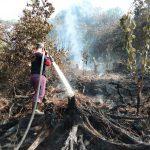 Riau Klaim Luasan Karhutla Tahun Ini Turun 71%