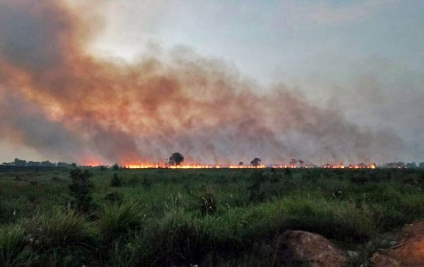 Tak Seperti Biasa, Status Siaga Darurat Karhutla Riau Dirangkap Hingga 9 Bulan Kedepan
