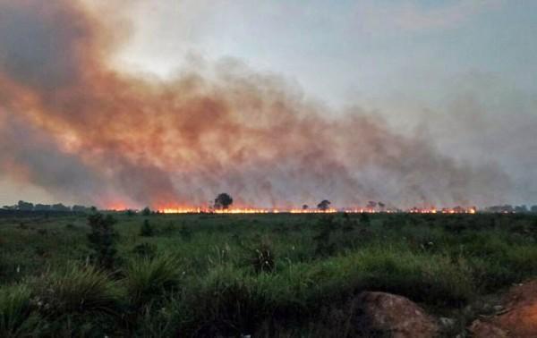188 Desa di Riau Rawan Karhutla dan Butuh Penanganan Ekstra