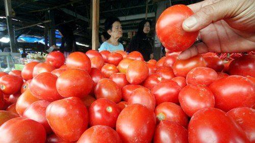 Akhir Pekan, Harga Tomat dan Sayuran di Pekanbaru Naik