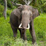 Ilmuan Ini Bikin Minuman Alkohol dari Kotoran Gajah