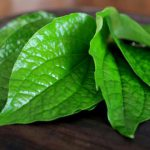 Di Riau Banyak Daun Sirih, Ini Kandungan Vitamin yang Terkandung dari Daun Sirih