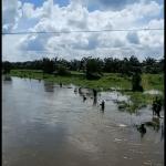Melimpah, Warga Ramai-Ramai Tangkap Ikan di Bawah Jembatan Teratak Buluh