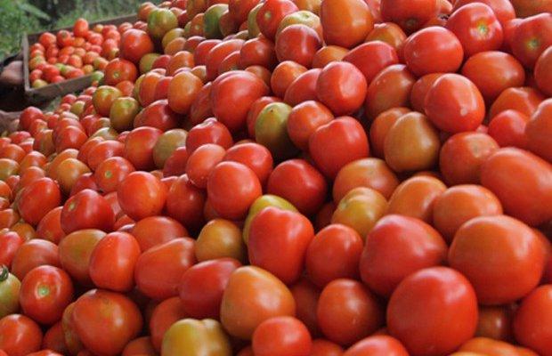Harga Tomat di Pekanbaru Terus Naik