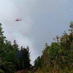 10 Hektar Hutan Suaka Margasatwa Giam Siak Kecil Terbakar