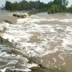 Tanggul Jebol, 1000 Hektare Sawah di Kuala Kampar Terancam Gagal Panen
