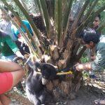 Terjerat Tali Nylon, Detik-detik Evakuasi Anak Beruang Madu di Inhu Berlangsung Dramatis