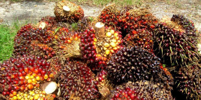Harga TBS Sawit di Riau Bergerak Naik di Tengah Gempuran Corona