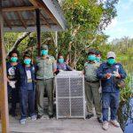 KLHK Kembali Lepasliarkan Orangutan di Taman Nasional Tanjung Puting