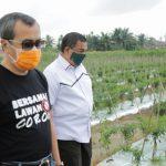 COVID-19 : Gubri Sibuk Tinjau Kebun Sayur untuk Ketersediaan Pangan, Padahal Produksi Baras Sudah Turun Sejak 2019 Lalu