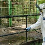 Kebun Binatang Kasang Kulim Disemprot Disinfektan dan Sudah Ditutup untuk Umum