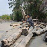 Lihat Balok-Balok Kayu di Pinggir Pantai? Segera Buang, Bahaya