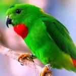 Ini Nasehat UAS untuk Para Pemelihara Burung