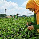 Penggiat Lingkungan di Riau Tolak Namun Murod Jadi Kadis LHK Riau