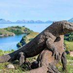 Taman Nasional Komodo Perpanjang Masa Penutupan
