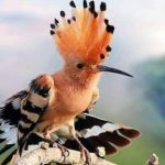 Burung Hud Hud dan Cara Nabi Sulaiman Mengatasi Hoaks