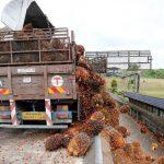 Harga CPO Membaik Seiring Pulihnya Konsumsi China dan India