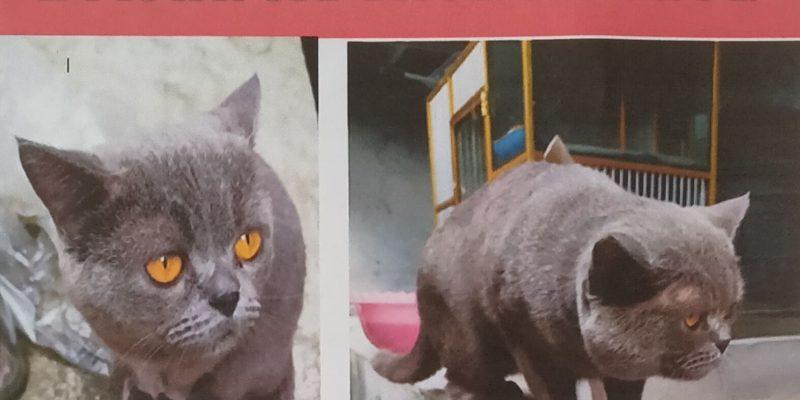 BERITA KEHILANGAN: Siapapun yang Menemukan Kucing Ini Dapat Imbalan Rp1,5 Juta