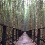 1,2 Juta Ha Gambut Serta 21 Ribu Ha Mangrove di Riau Jadi Target restorasi dan Rehabilitasi