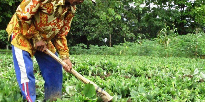 Gubri Sebut Nanas dan Kencur dari Riau Kini Jadi Komoditi Ekspor