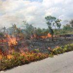 Antisipasi Karhutla Riau, Seluruh Perangkat Perlu Diaktifkan