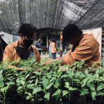 Mahasiswa Kukerta Balek Kampung UNRI Ikut Bagikan 1000 Bibit Cabai di Kelurahan Limbungan Baru