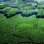Ini Rincian Sektor Tambang, Hutan dan Kebun di Riau yang Diklaim Berkontribusi Besar Terhadap Nasional
