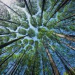 Hari Bumi 22 April, Jikalahari Desak Pemerintah Selamatkan 'Penjaga Bumi' dari Perubahan Iklim