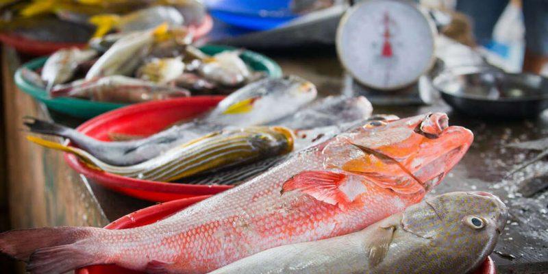 Habis Lebaran Harga Ikan di Pekanbaru Naik
